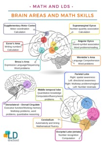 Diagram of brain areas math skills