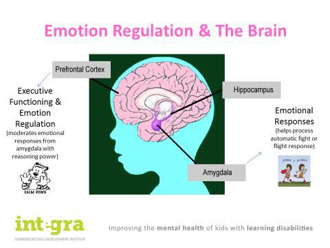 Chart- Emotion Regulation and Brain