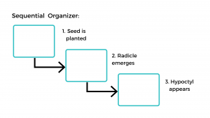 Sequential organizer with information on how a bean seed germinates.