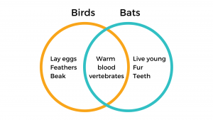 venn diagram showing the similarities and differences between birds and bats.